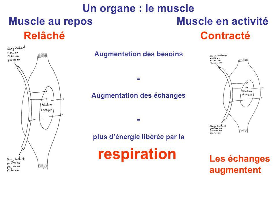 Muscle au repos Muscle en activité Augmentation des besoins