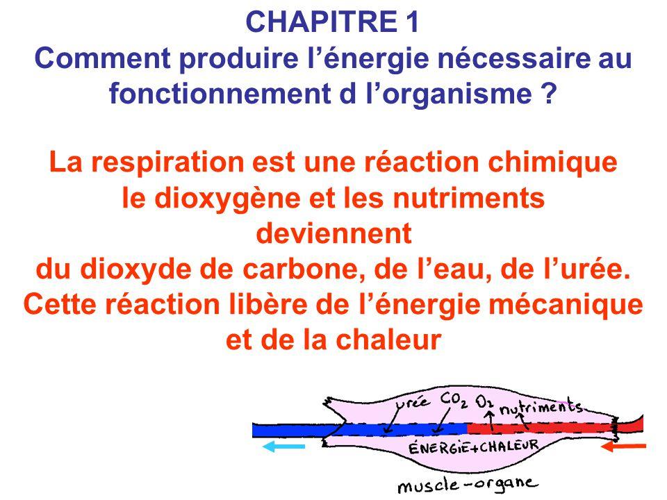 La respiration est une réaction chimique