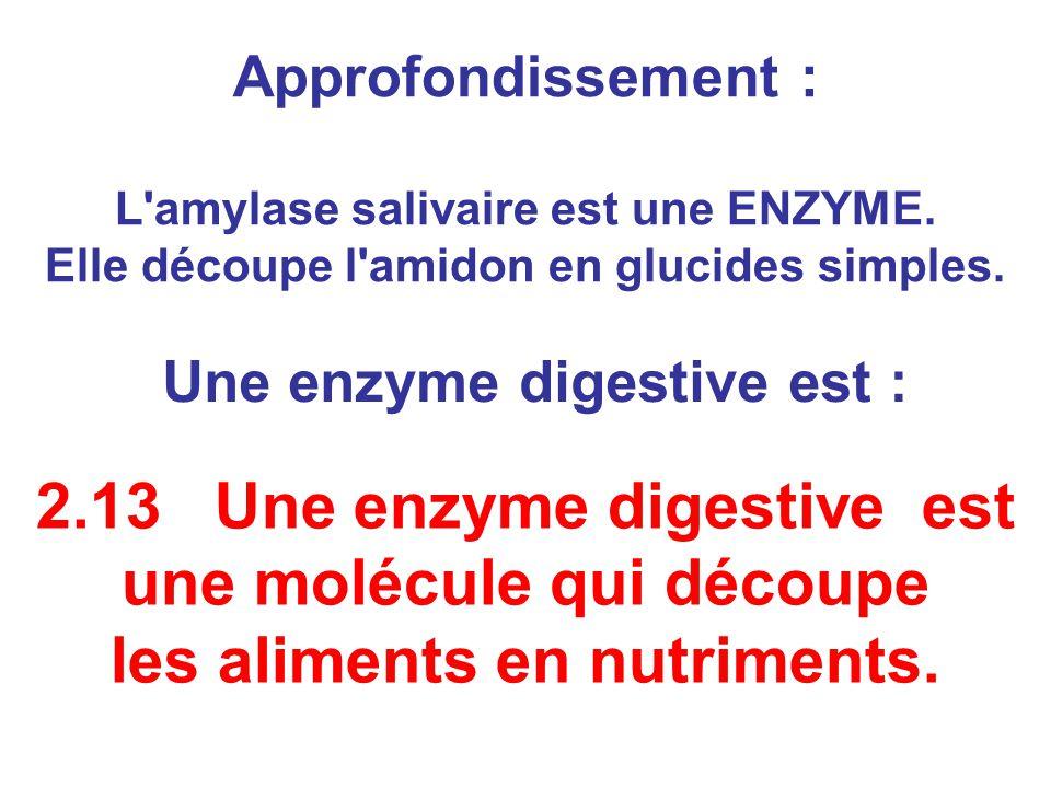 2.13 Une enzyme digestive est une molécule qui découpe