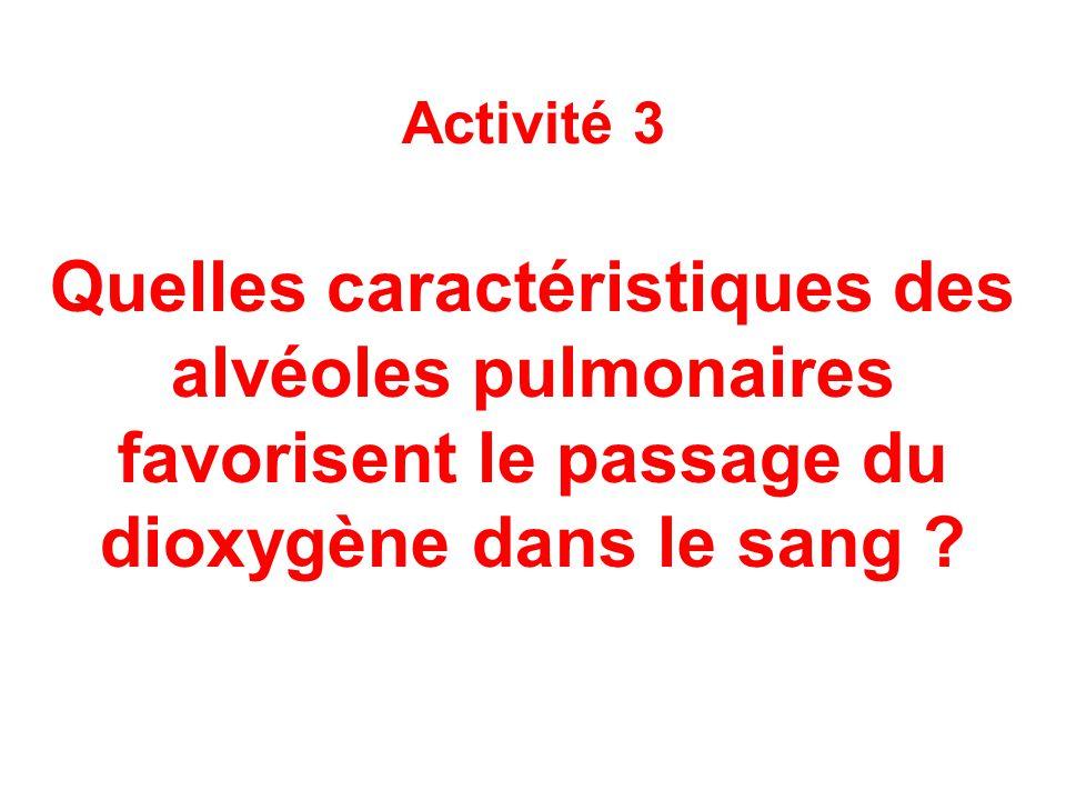Activité 3 Quelles caractéristiques des alvéoles pulmonaires favorisent le passage du dioxygène dans le sang
