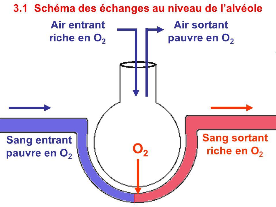 O2 3.1 Schéma des échanges au niveau de l'alvéole