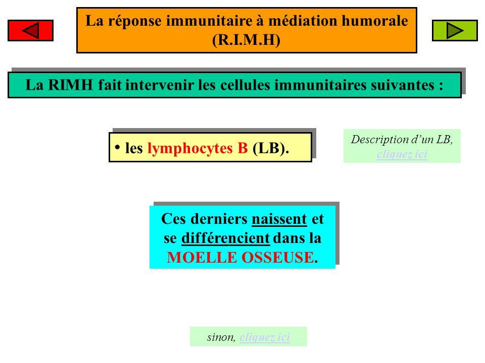 La réponse immunitaire à médiation humorale (R.I.M.H)