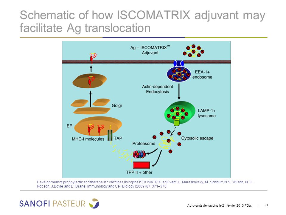 Schematic of how ISCOMATRIX adjuvant may facilitate Ag translocation
