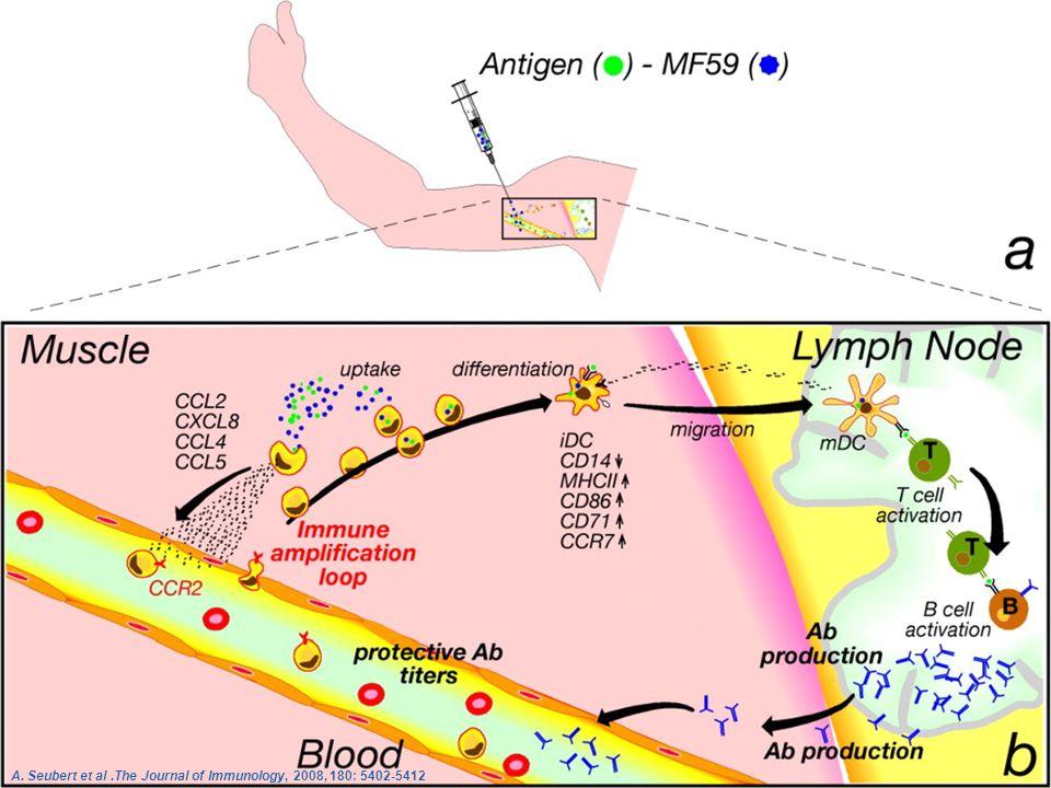 A. Seubert et al .The Journal of Immunology, 2008, 180: 5402-5412