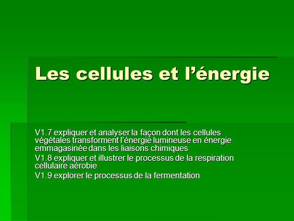 Les cellules et l'énergie