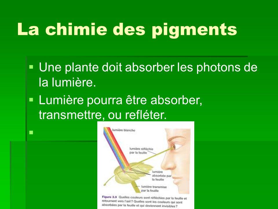 La chimie des pigments Une plante doit absorber les photons de la lumière.