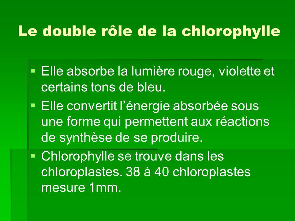 Le double rôle de la chlorophylle