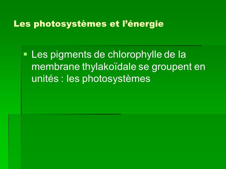 Les photosystèmes et l'énergie