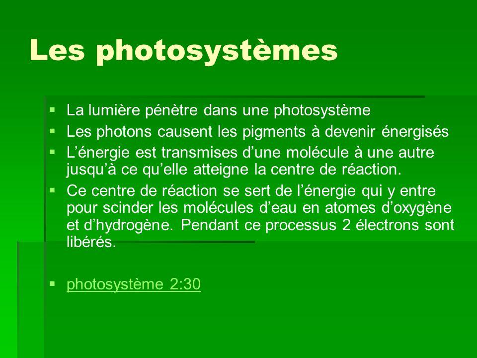 Les photosystèmes La lumière pénètre dans une photosystème
