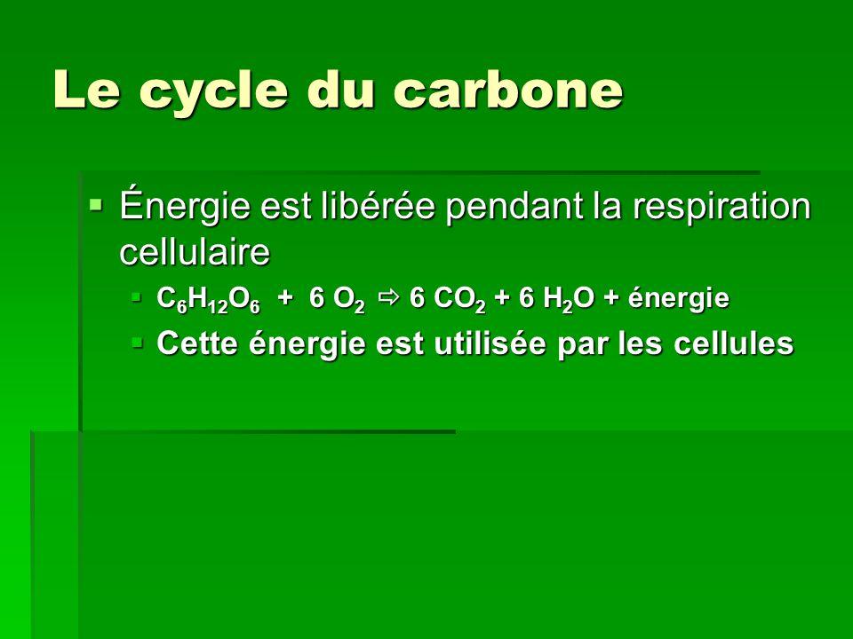Le cycle du carbone Énergie est libérée pendant la respiration cellulaire. C6H12O6 + 6 O2  6 CO2 + 6 H2O + énergie.