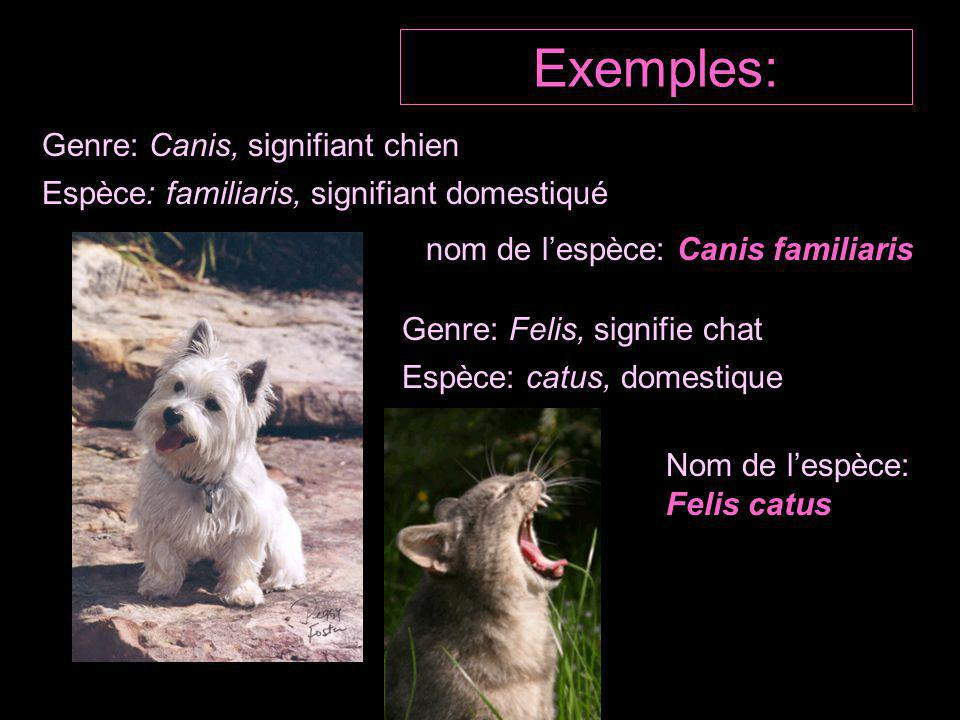 Exemples: Genre: Canis, signifiant chien