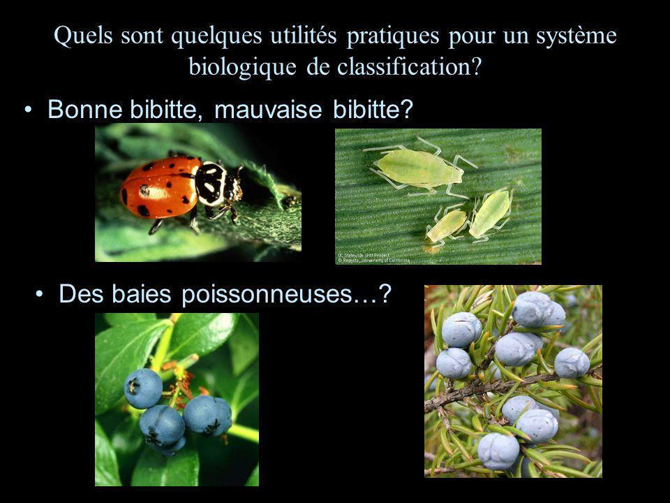 Quels sont quelques utilités pratiques pour un système biologique de classification