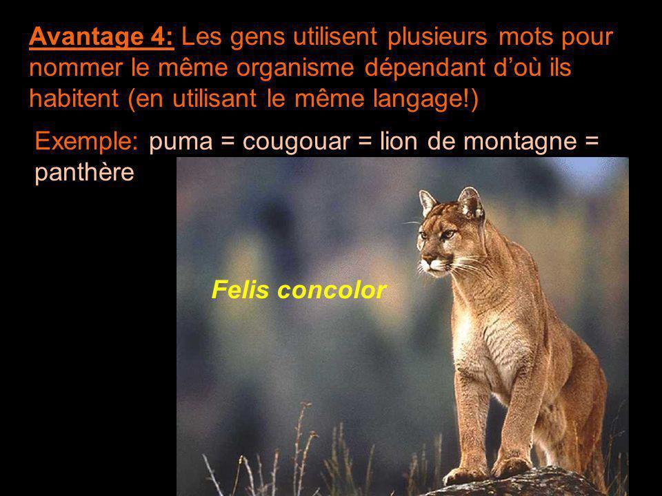 Avantage 4: Les gens utilisent plusieurs mots pour nommer le même organisme dépendant d'où ils habitent (en utilisant le même langage!)