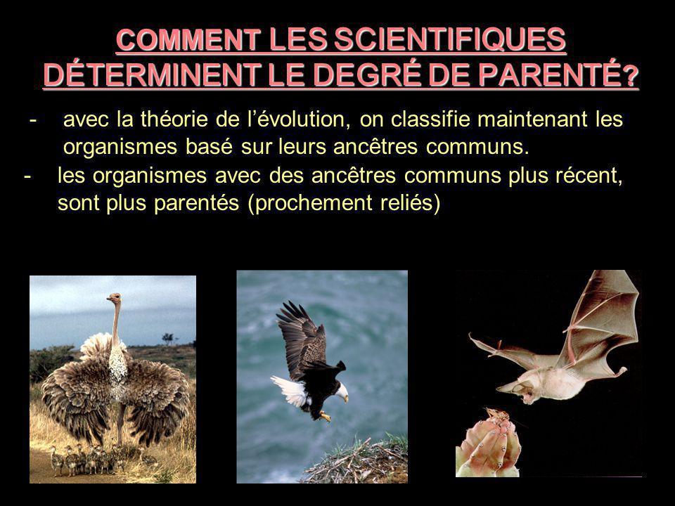 COMMENT LES SCIENTIFIQUES DÉTERMINENT LE DEGRÉ DE PARENTÉ