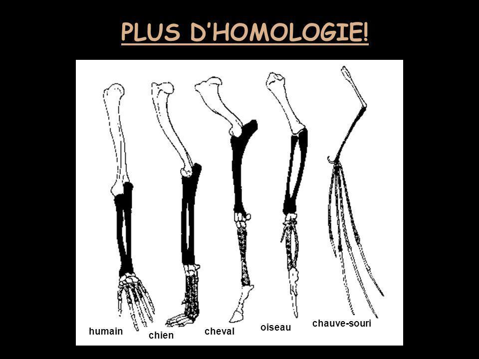 PLUS D'HOMOLOGIE! chauve-souri oiseau humain cheval chien