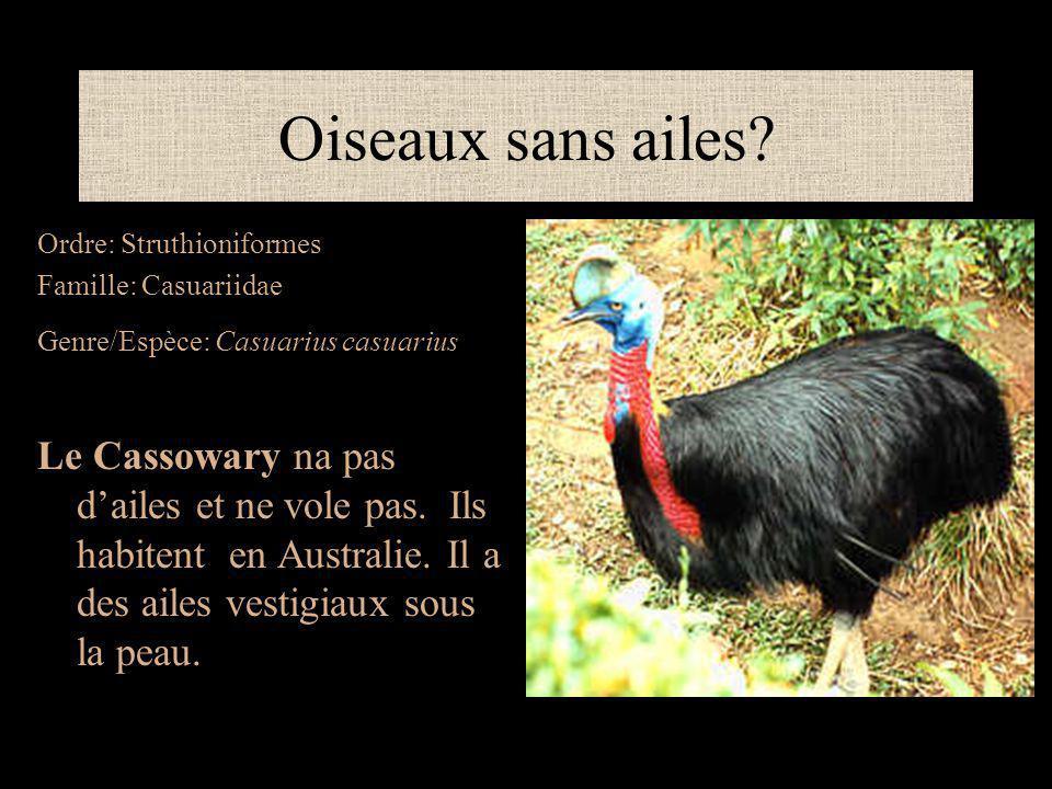 Oiseaux sans ailes Ordre: Struthioniformes. Famille: Casuariidae. Genre/Espèce: Casuarius casuarius.