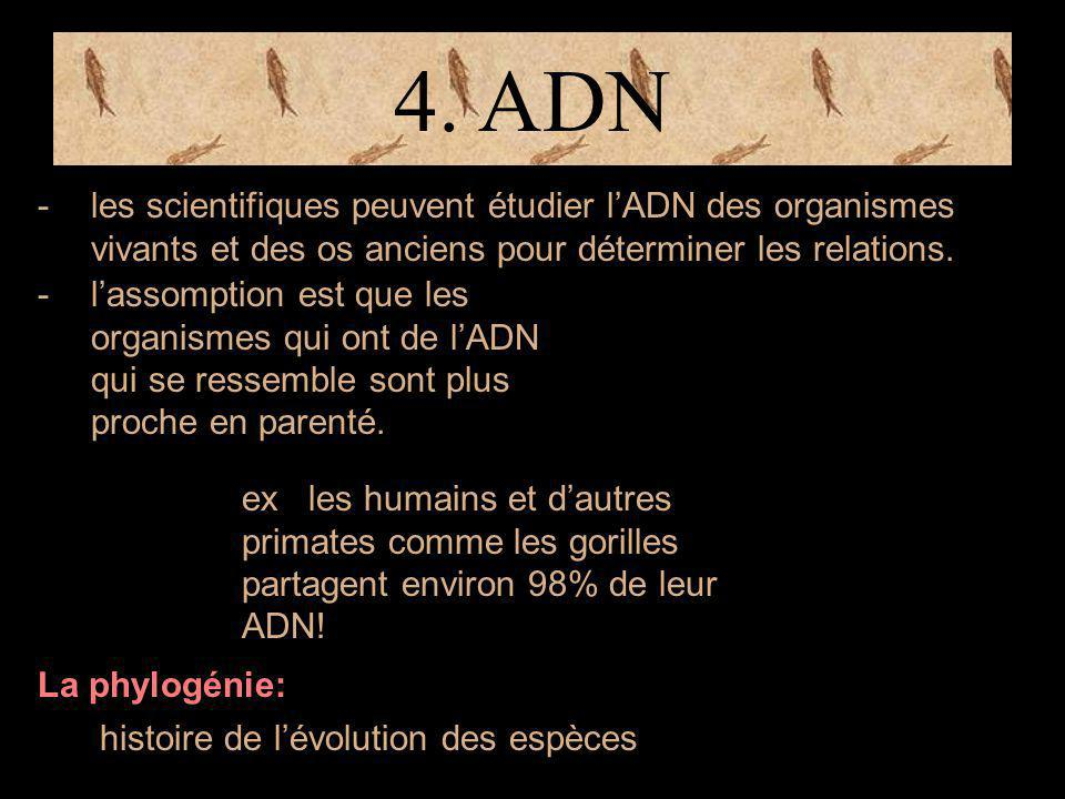 4. ADN les scientifiques peuvent étudier l'ADN des organismes vivants et des os anciens pour déterminer les relations.