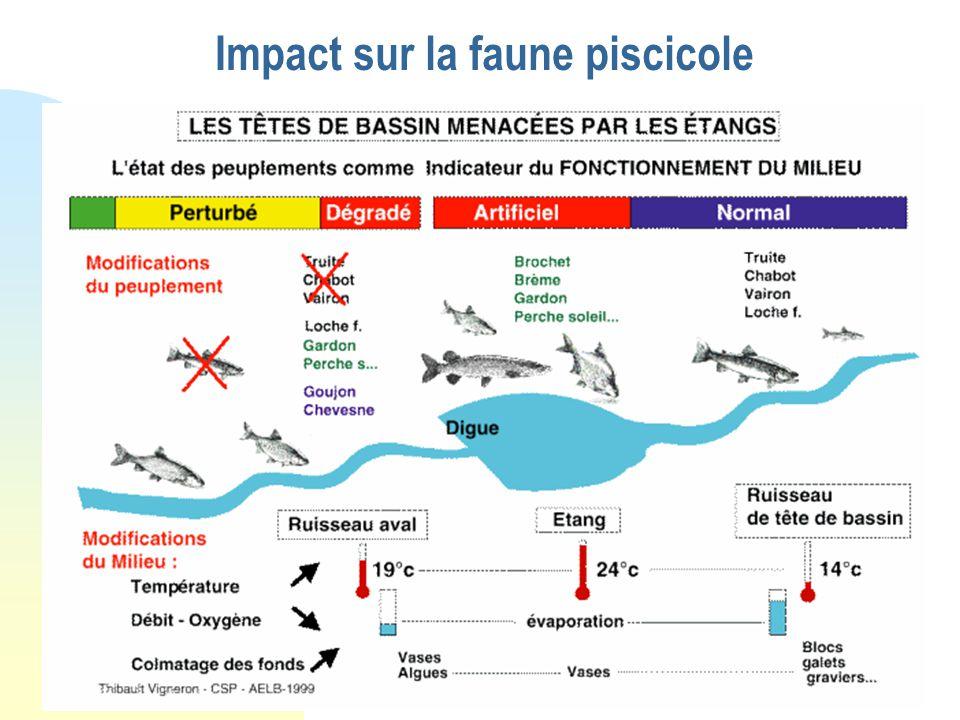 Impact sur la faune piscicole