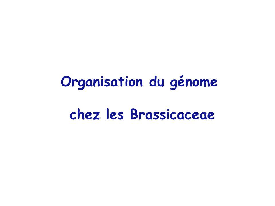 Organisation du génome