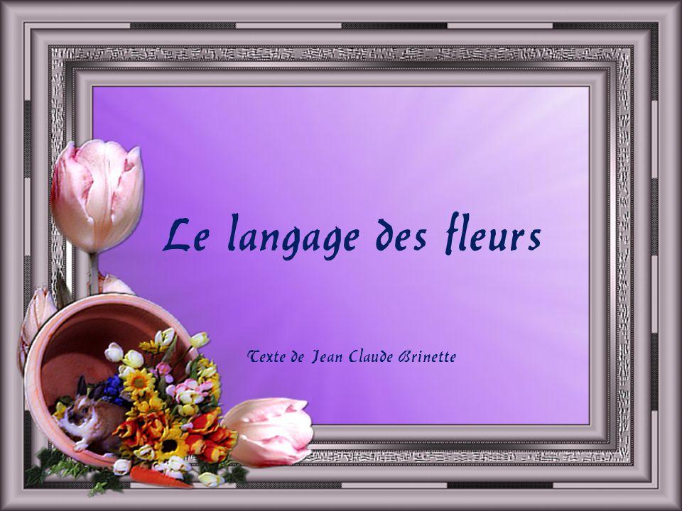 Texte de Jean Claude Brinette
