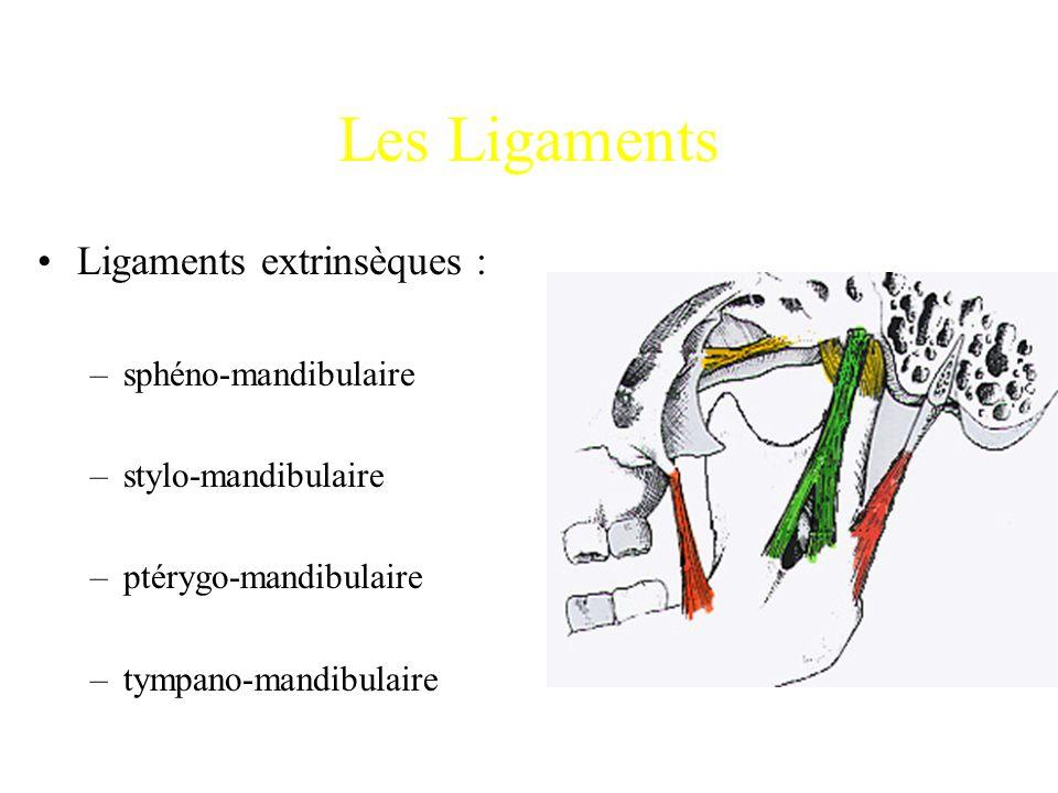 Les Ligaments Ligaments extrinsèques : sphéno-mandibulaire