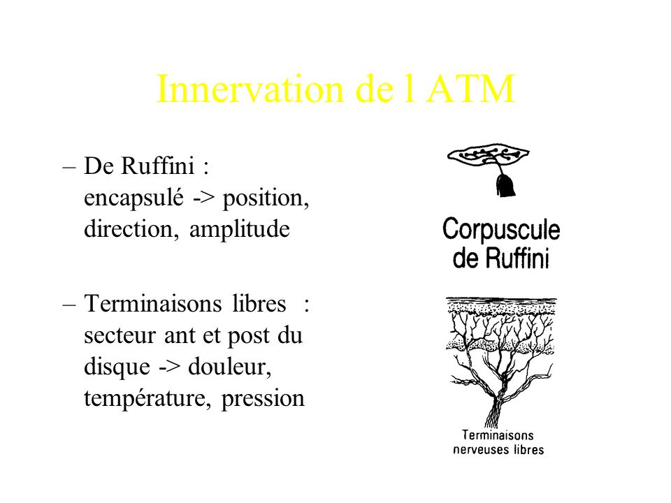 Innervation de l ATM De Ruffini : encapsulé -> position, direction, amplitude.
