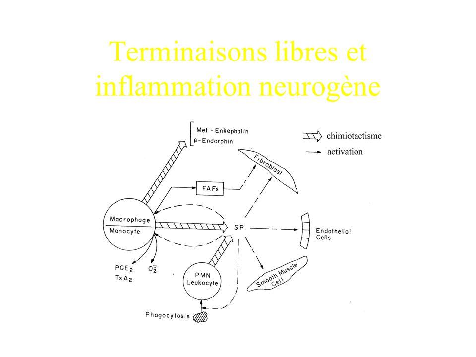 Terminaisons libres et inflammation neurogène