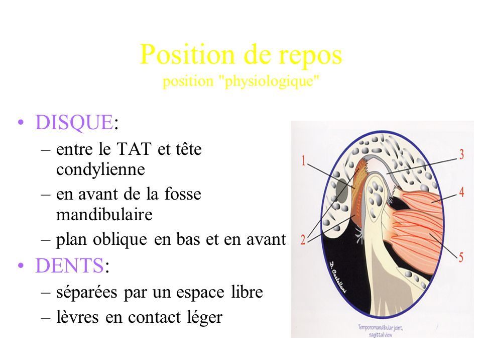 Position de repos position physiologique