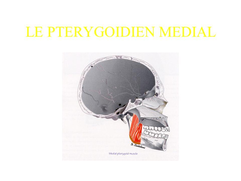 LE PTERYGOIDIEN MEDIAL