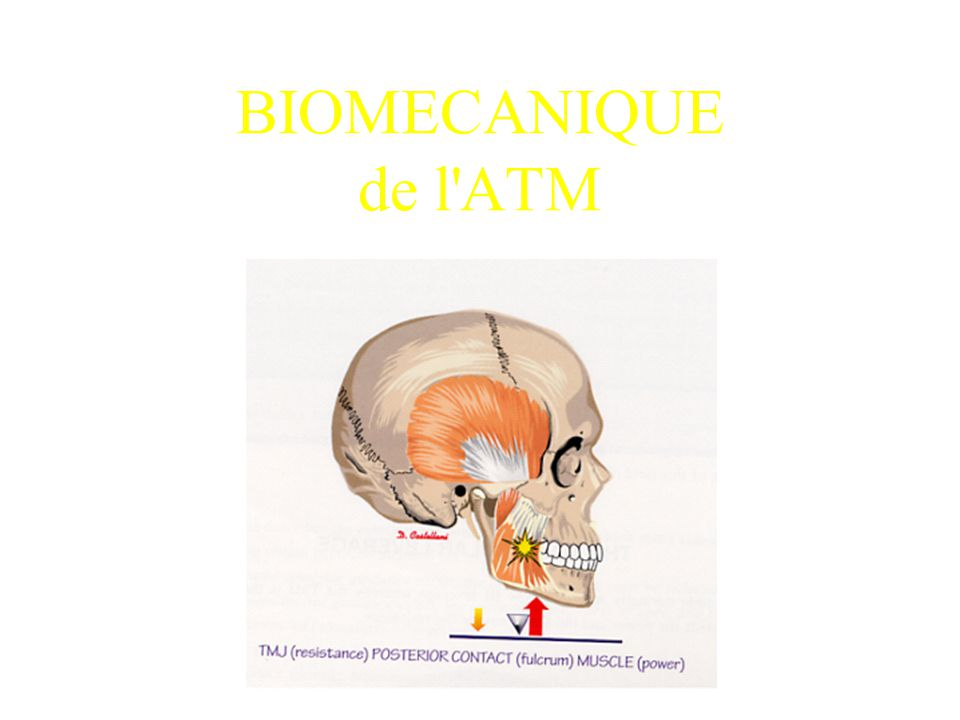 BIOMECANIQUE de l ATM