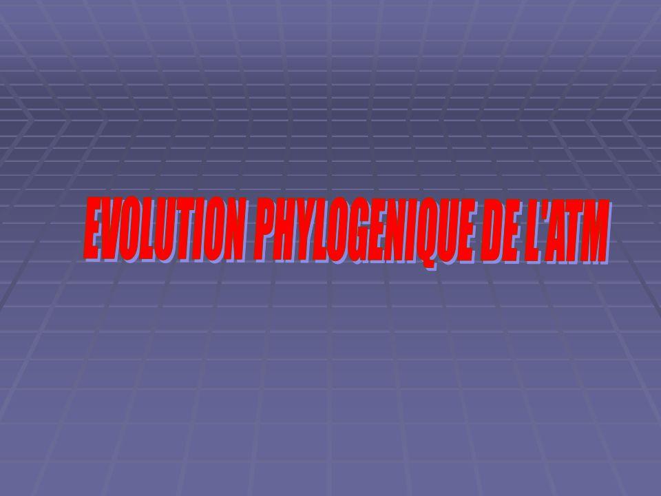 EVOLUTION PHYLOGENIQUE DE L ATM