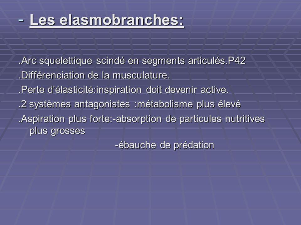 Les elasmobranches: .Arc squelettique scindé en segments articulés.P42