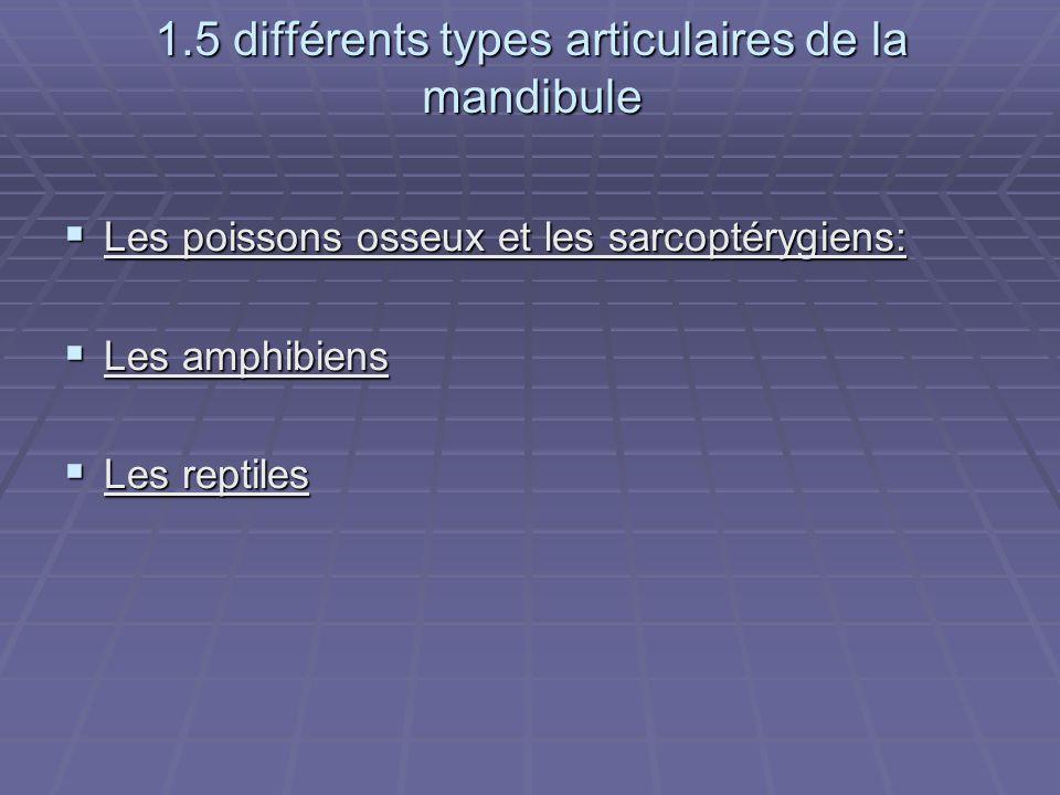 1.5 différents types articulaires de la mandibule
