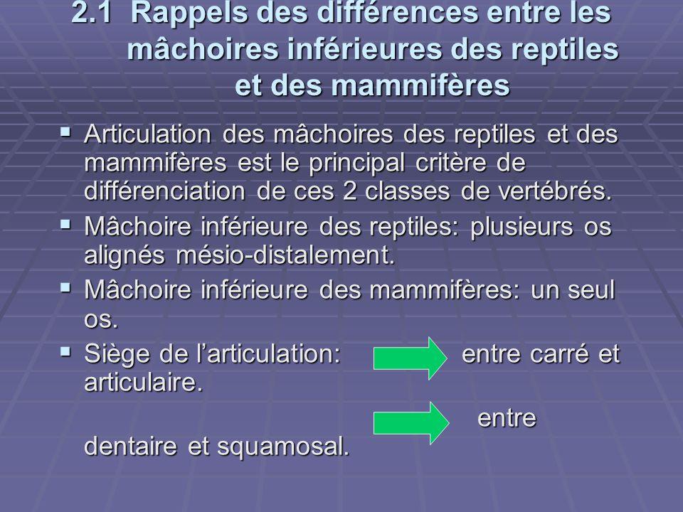2.1 Rappels des différences entre les mâchoires inférieures des reptiles et des mammifères