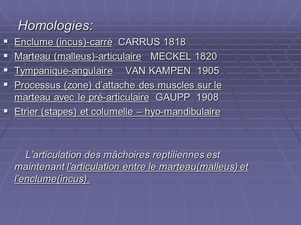 Homologies: Enclume (incus)-carré CARRUS 1818