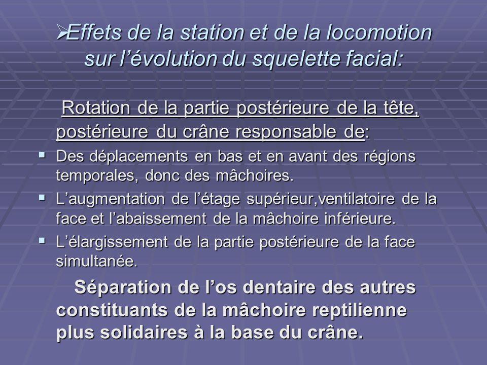 Effets de la station et de la locomotion sur l'évolution du squelette facial: