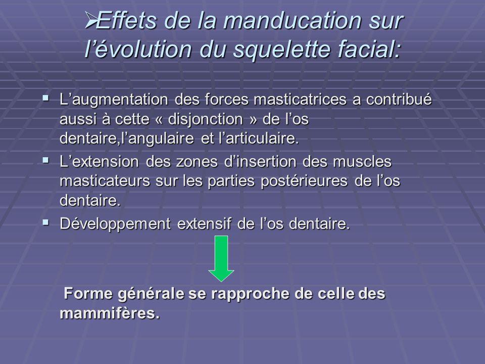 Effets de la manducation sur l'évolution du squelette facial: