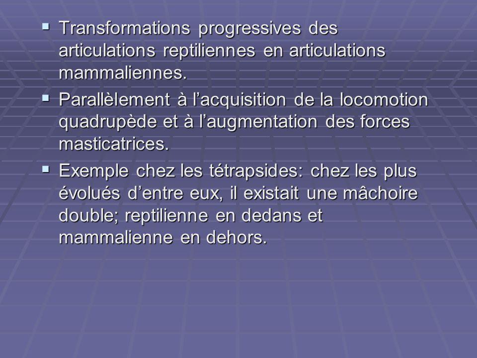 Transformations progressives des articulations reptiliennes en articulations mammaliennes.