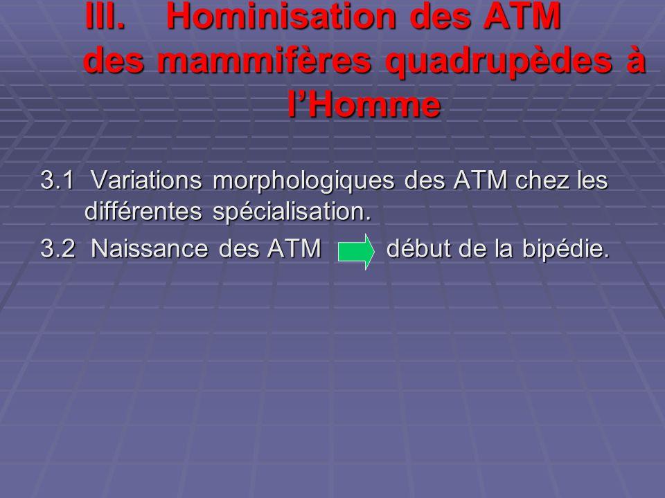 Hominisation des ATM des mammifères quadrupèdes à l'Homme