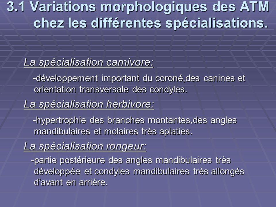 3.1 Variations morphologiques des ATM chez les différentes spécialisations.