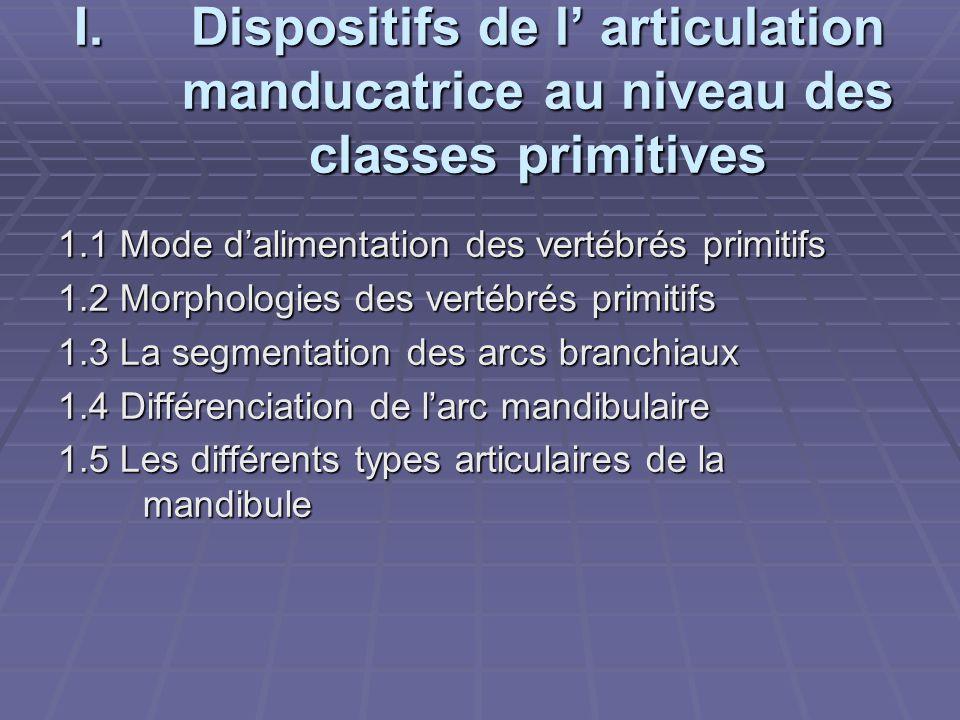 Dispositifs de l' articulation manducatrice au niveau des classes primitives