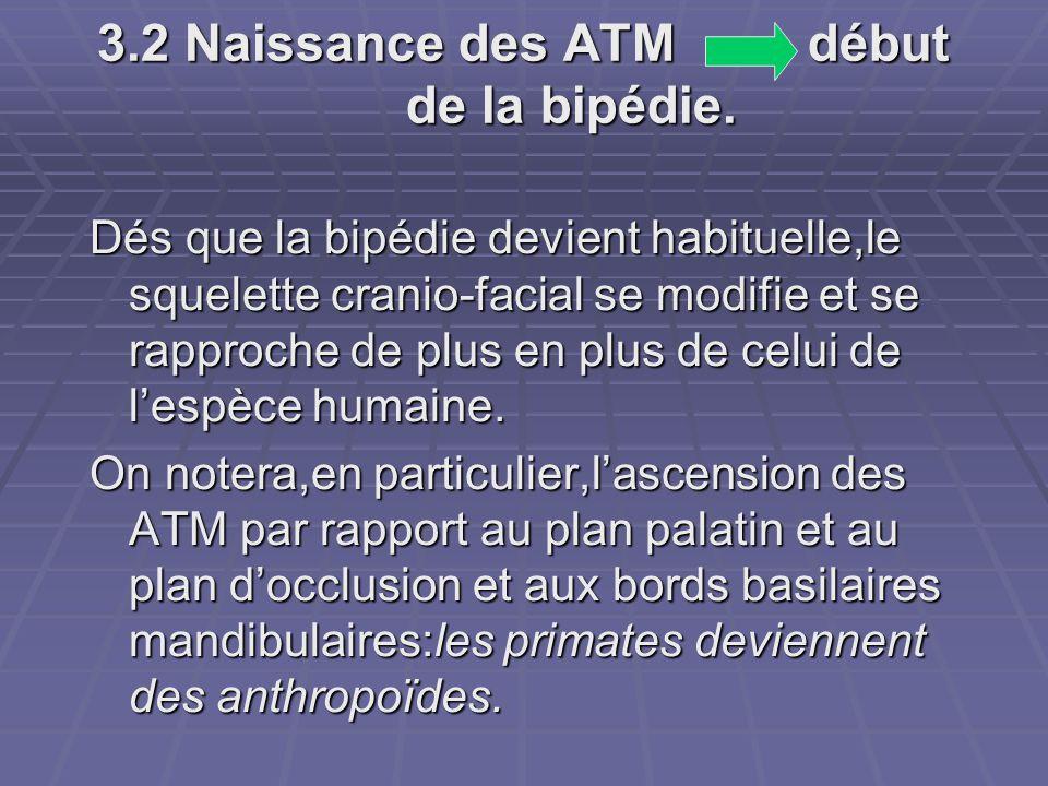 3.2 Naissance des ATM début de la bipédie.
