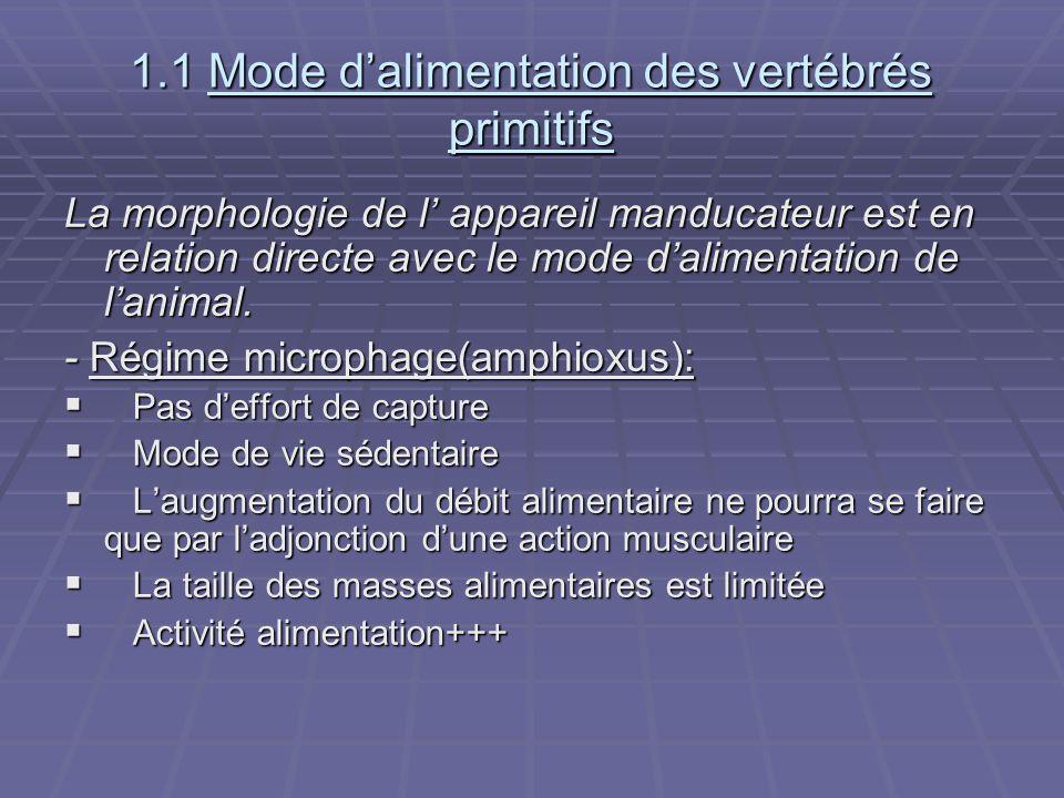 1.1 Mode d'alimentation des vertébrés primitifs