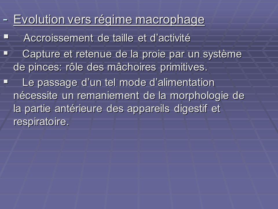 Evolution vers régime macrophage Accroissement de taille et d'activité