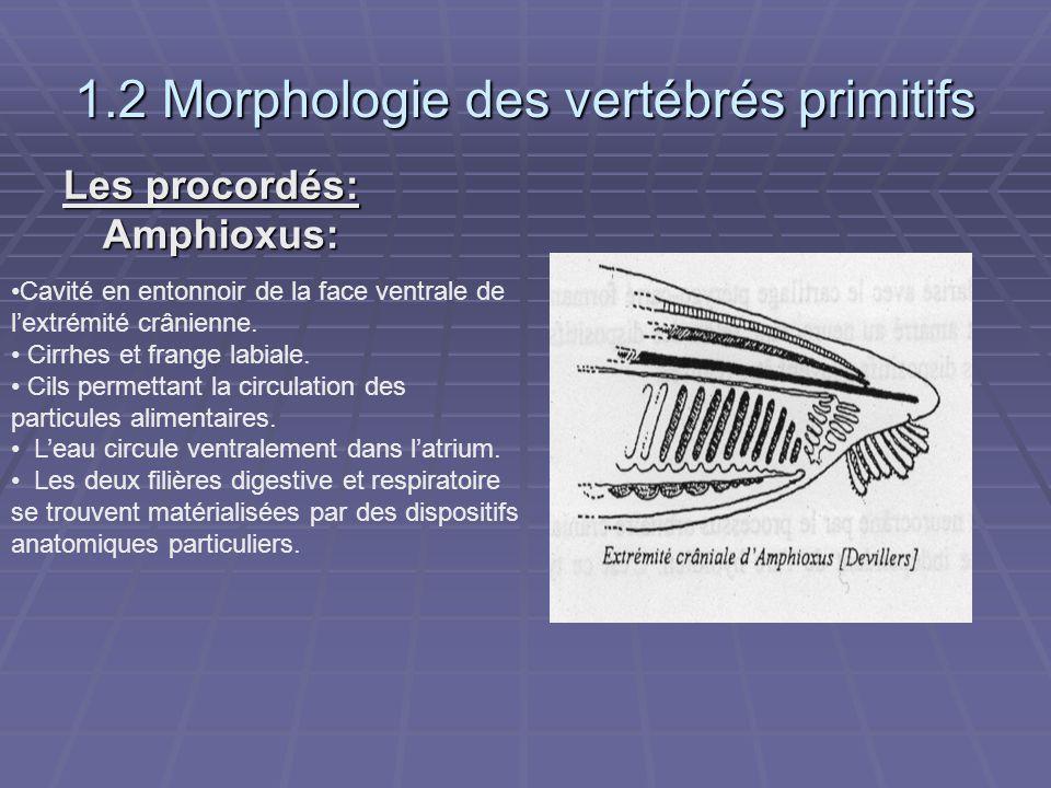 1.2 Morphologie des vertébrés primitifs