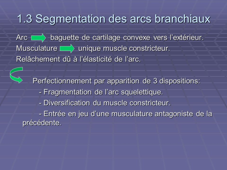 1.3 Segmentation des arcs branchiaux
