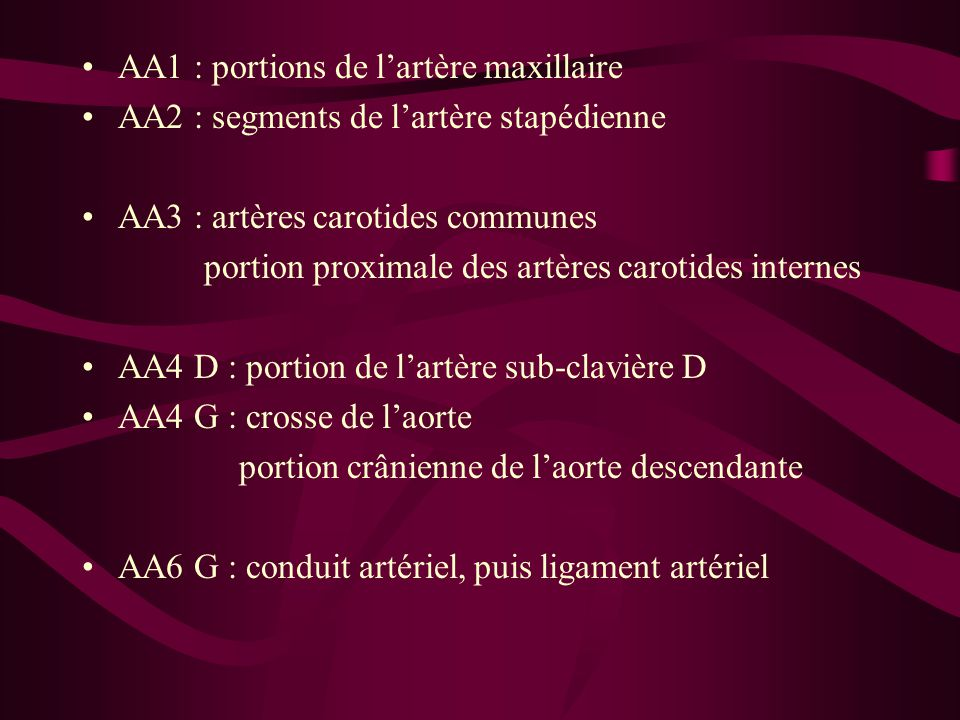 AA1 : portions de l'artère maxillaire