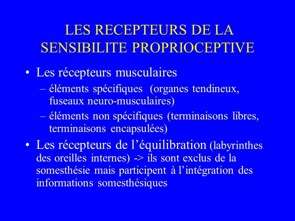 LES RECEPTEURS DE LA SENSIBILITE PROPRIOCEPTIVE