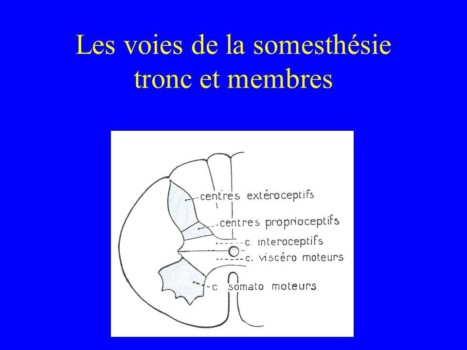 Les voies de la somesthésie tronc et membres