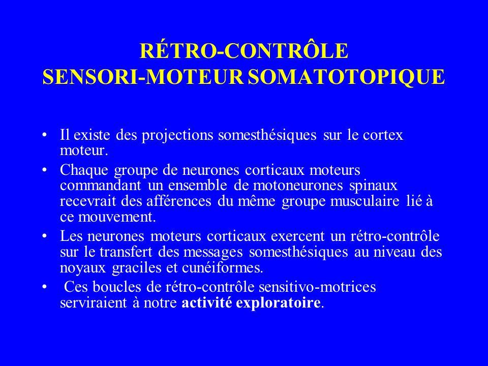 RÉTRO-CONTRÔLE SENSORI-MOTEUR SOMATOTOPIQUE